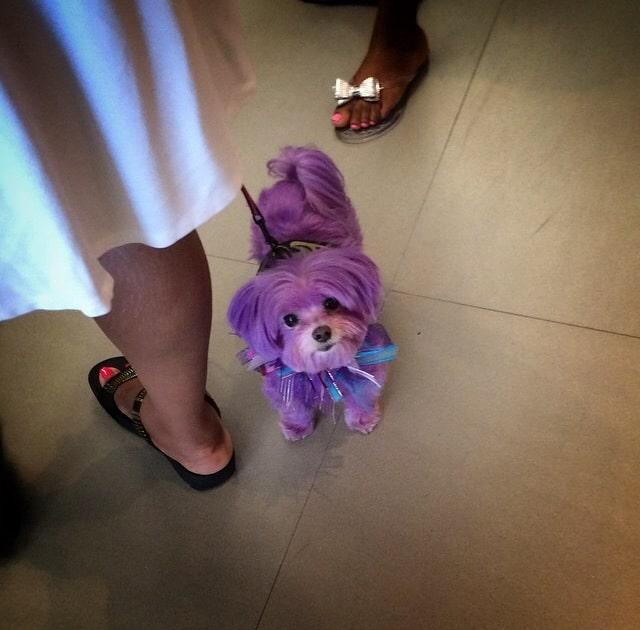 Only In LA: Purple Doggie