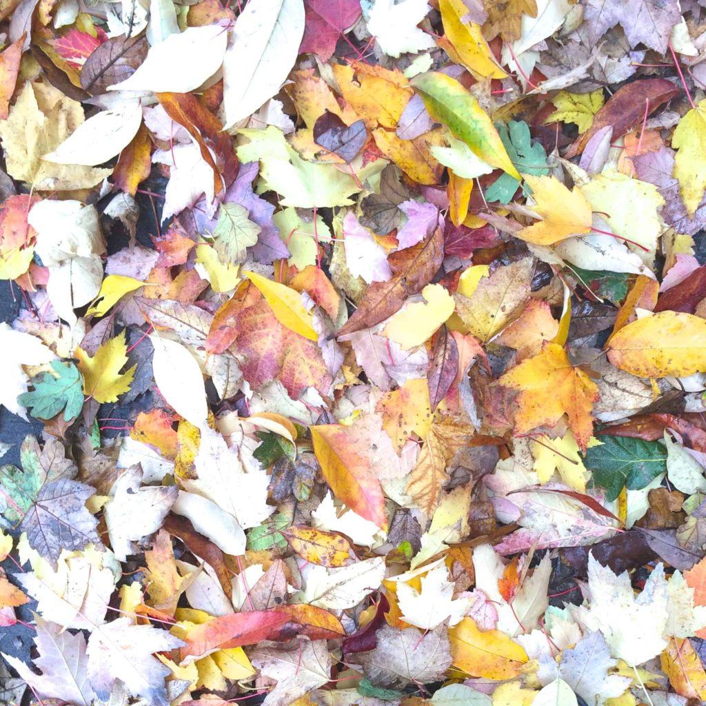 Fall Leaves in Portland