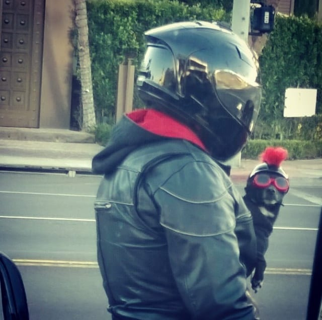 Only In LA: Biker Dog
