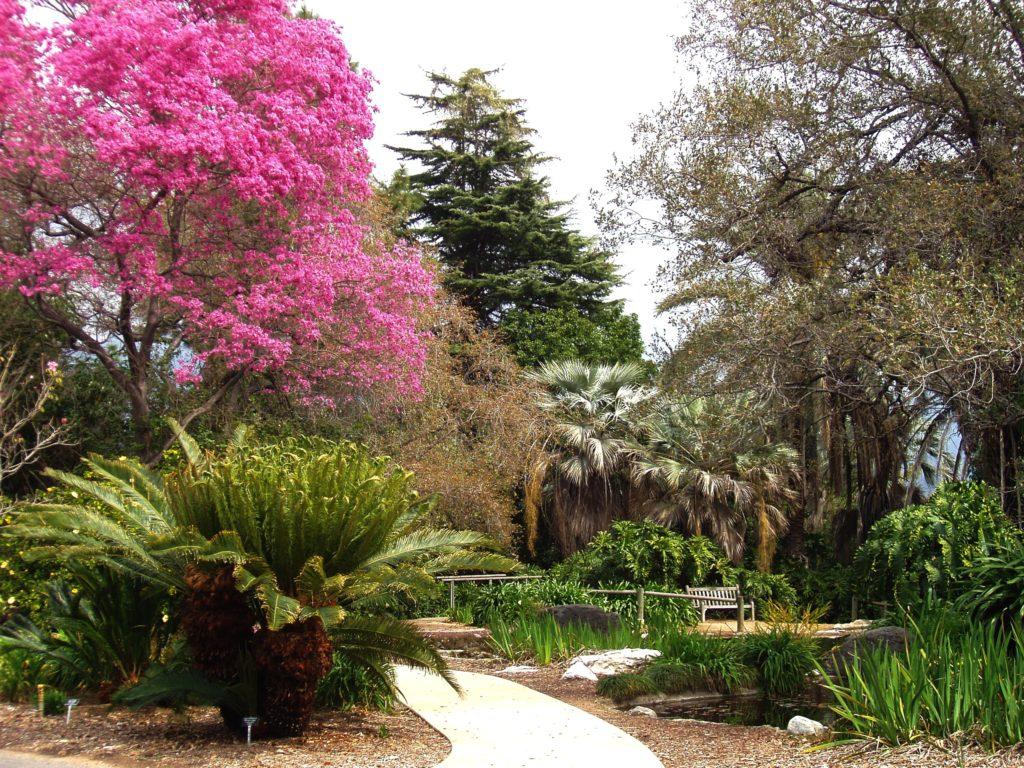 LA_County_Arboretum_-_knoll