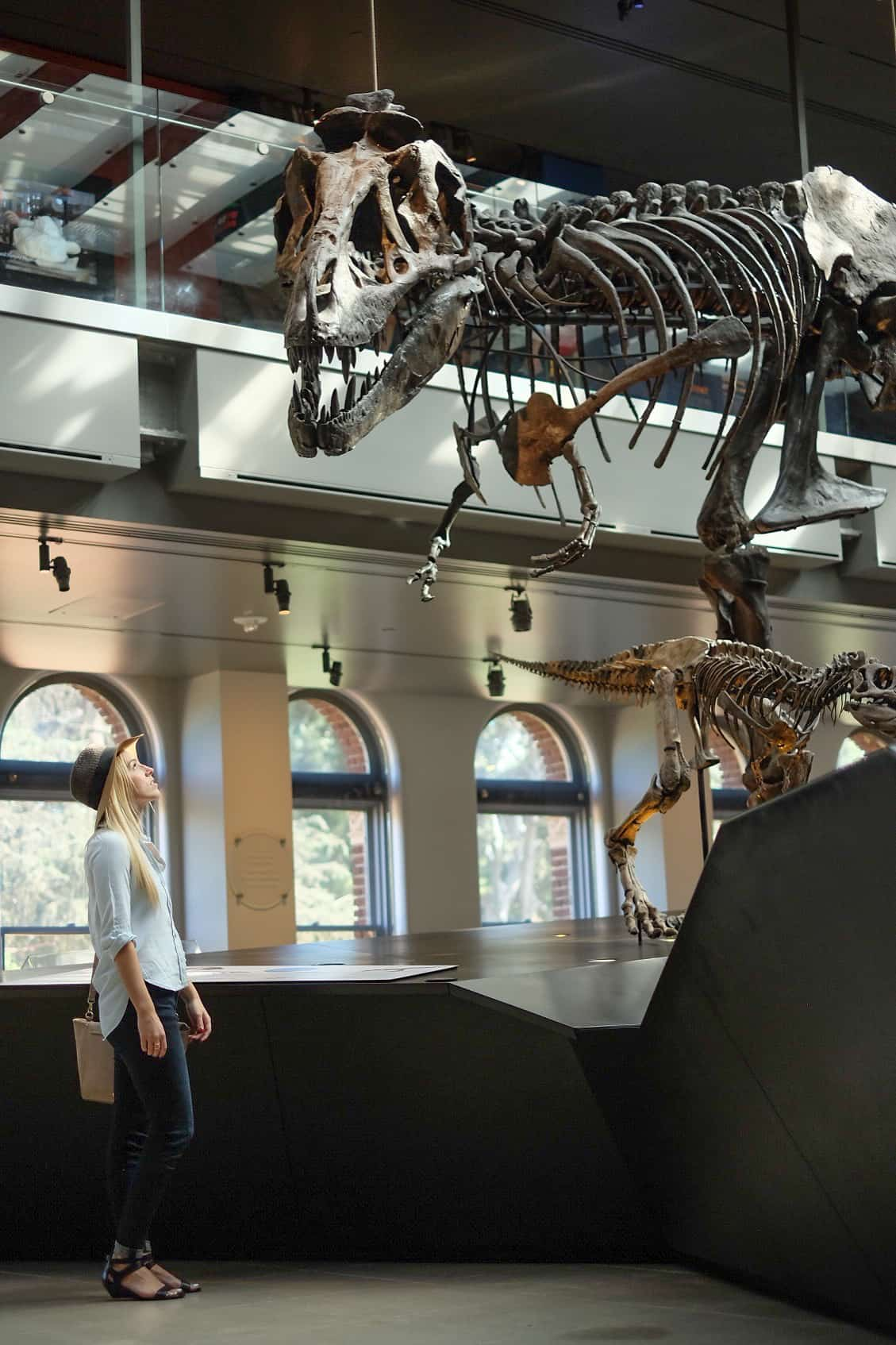 Week No. 8 | The Natural History Museum of Los Angeles