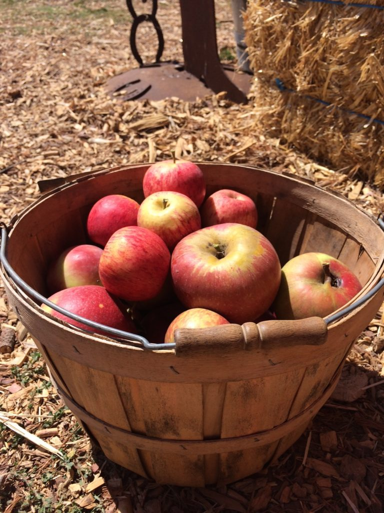 Apple Picking at SLO Creek Farms