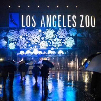 Week No. 22 | LA Zoo Lights