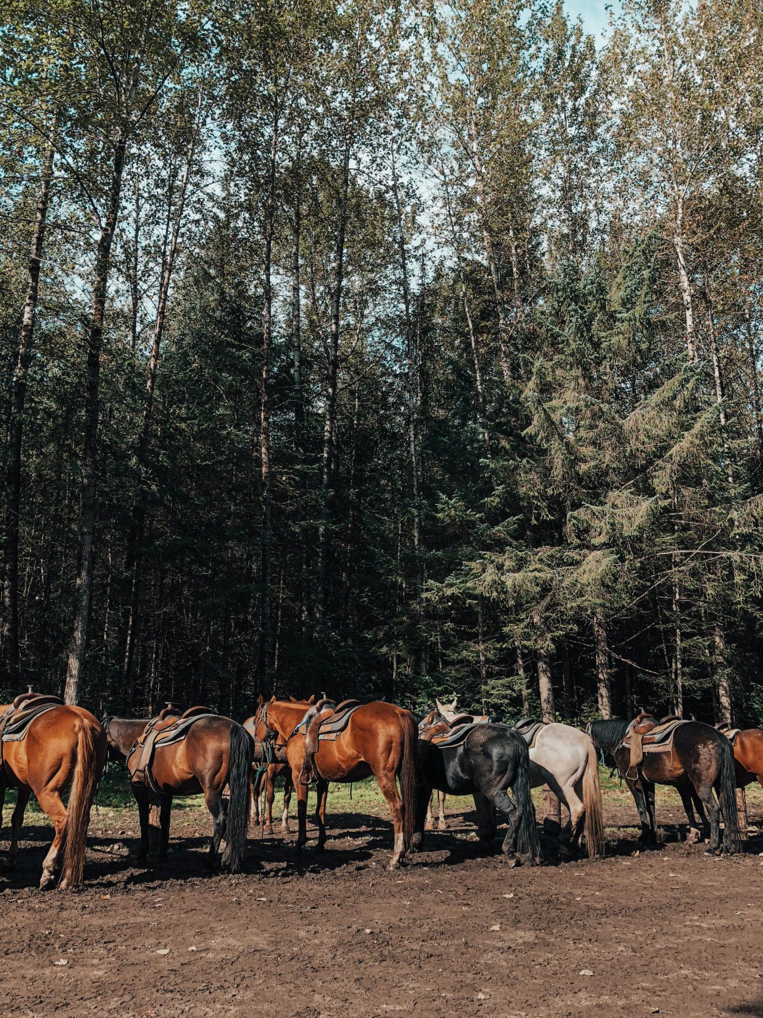 horseback riding   Alaskan photo diary